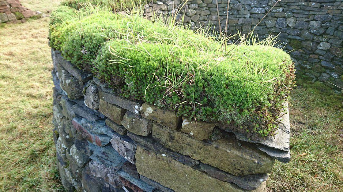 ドライストーンウォーリングでつくられた石垣。天端に苔が乗ると雰囲気がぐっと柔らかくなる/イギリス・コッツウォルズにて